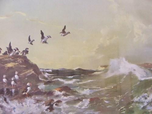 Vintage Vernon Ward Bird Print