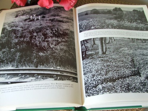 Understanding the Countryside book edited by James Gunston